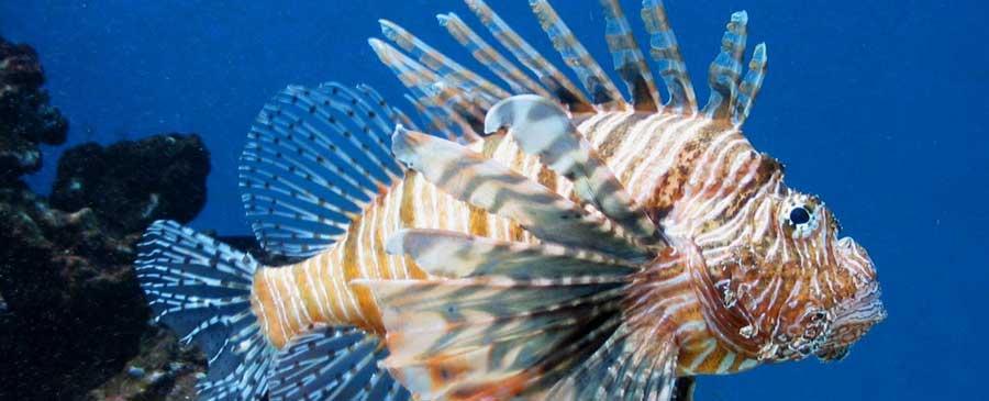 NAME Blowfish and Trade